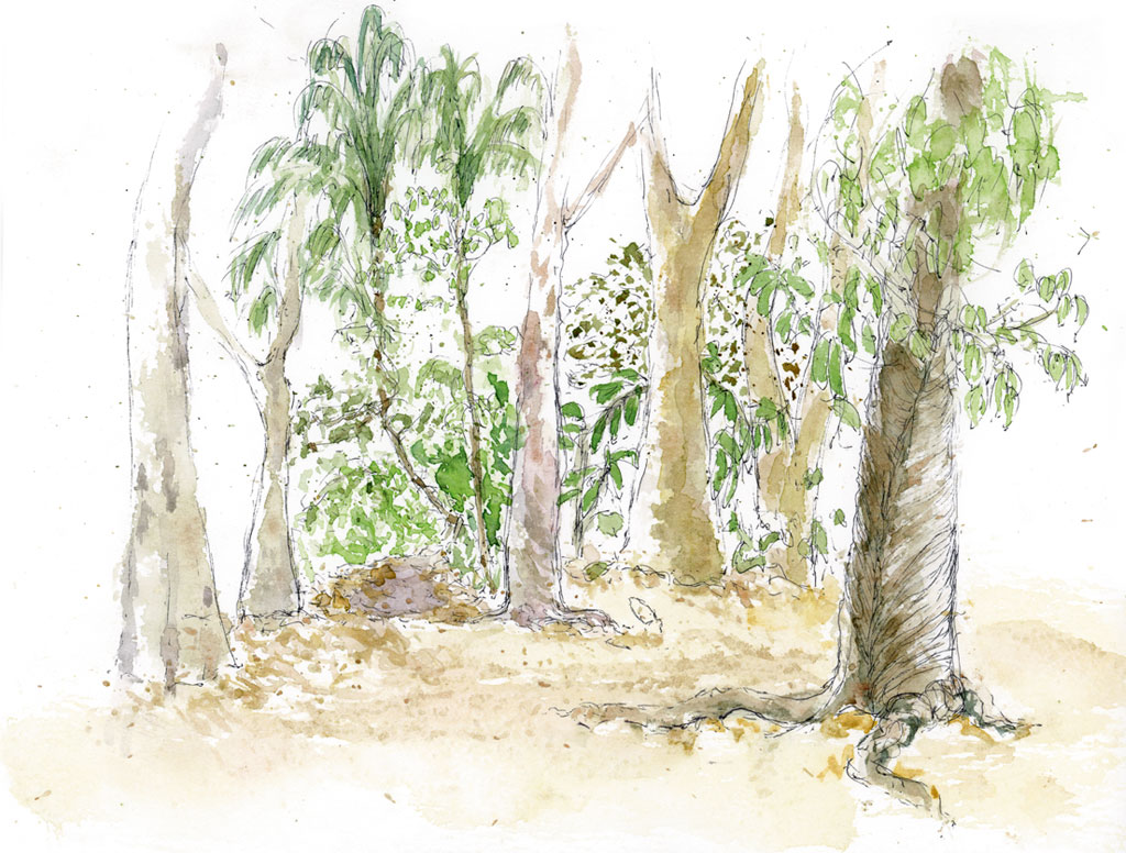 Amazonia_Jamaraqua_2011_270-x-210-mm_5